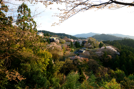 Cherry Blossom during Hanami Festival in Yoshino, Nara Prefecture, Kansai, Japan, is part of a UNESCO World Heritage site known as Sacred Sites and Pilgrimage Routes in the Kii Mountain Range. 版權商用圖片