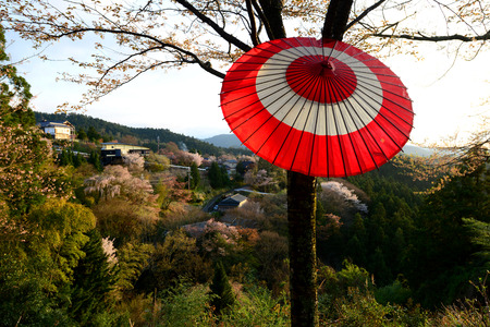 Cherry Blossom during Hanami Festival in Yoshino, Nara Prefecture, Kansai 版權商用圖片