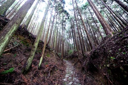 Kumano Kodo, the sacred historical pilgrimage route in Kansai, Japan