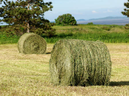 hayroll: Two hay rolls in a mowed field   Trees, meadow and hills in the background