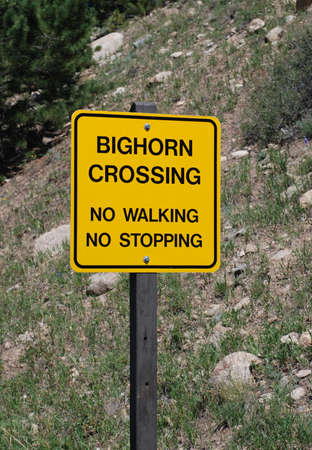 sheep road sign: Yellow warning sign on the side of road   Big Horn Sheep Crossing   Colorado Rocky Mountains Stock Photo