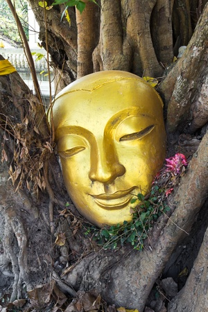 Golden head of buddha in tree