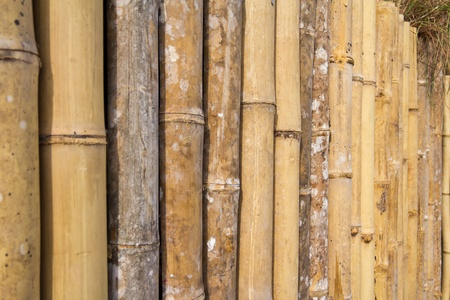 Thai style bamboo fence