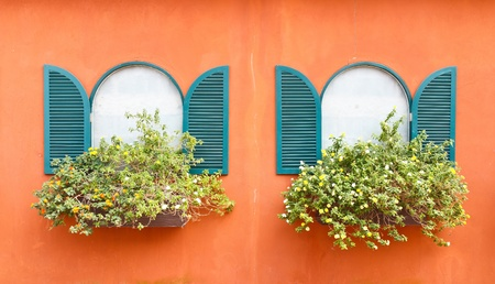 Window and flowerpot photo