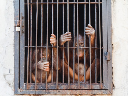 Monkey in cage of zoo