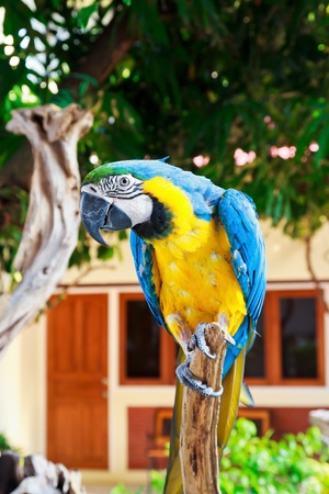 macaw on the tree Stock Photo