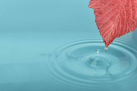 Red leaf on water with waves and drops photo