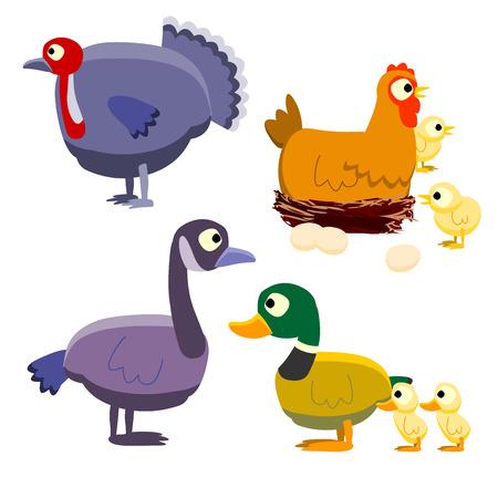 various birds cartoon vector