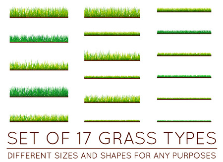 grass isolated: Set of Backgrounds Of Green Grass, Isolated On White Background, Vector Illustration Illustration