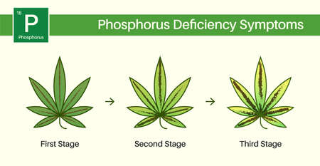 Medical Cannabis Growing Problems and Plant Pot Leaves Disease, Deficiency, Abundance, Excess. Three 3 Stages. Vecteurs