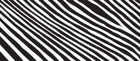 Wild Zebra Wave Pattern with black and white. Trendy Stylish Abstract Background.
