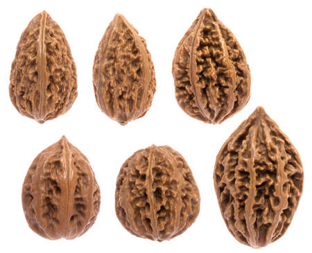 These walnuts are not for food, they are a special varieties with thick and hard shell  Some of them have decorative pattern, In china, they are ornaments and collectibles  photo