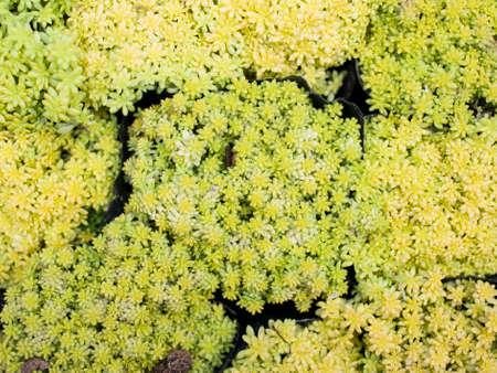 abreast: a lot of succulent plants