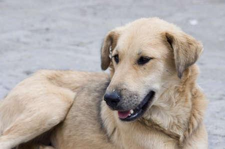 yeux tristes: a dog with sad eyes