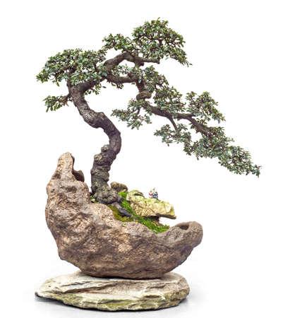 Chinesischer alter Bonsai