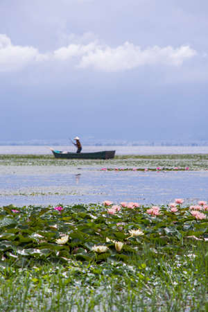 people who picking water chestnut on the Erhai lake.