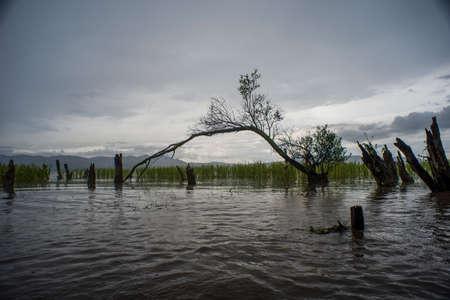 Wetland at Erhai lake, Dali, China