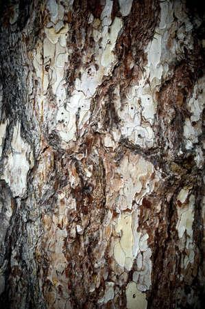 A texture bark photo