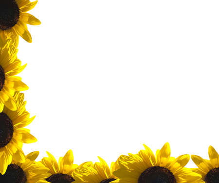 A border of sunflower photo