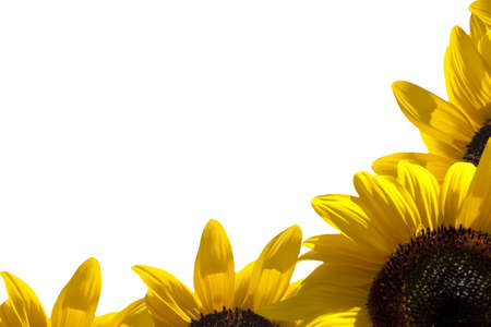 A border of sunflower Stock Photo