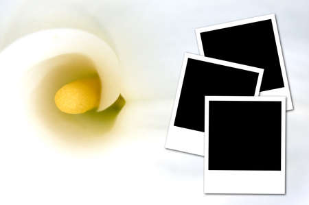 instant film transfer: Three photos isolated on a white calla background