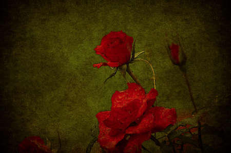 women subtle: A red rose aged in a green grunge background Stock Photo