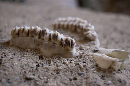 A fossil of a part of head in the sand photo
