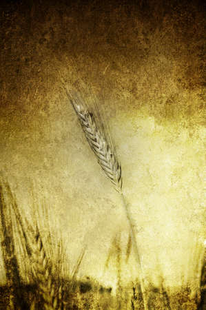 A grunge and yellow field of grain photo