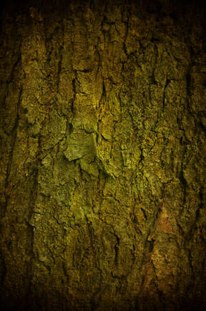 log wall: Abstract grunge barck with some crack and scratch Stock Photo