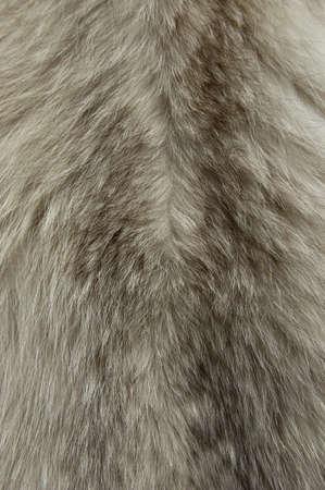 動物の着色された毛皮テクスチャのクローズ アップ