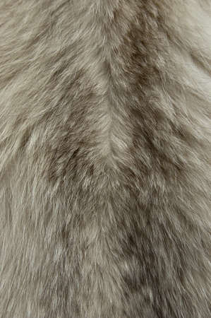 warm cloth: Close up of an animal colored fur texture