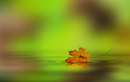 in september: Leaf fallen from a tree in the water