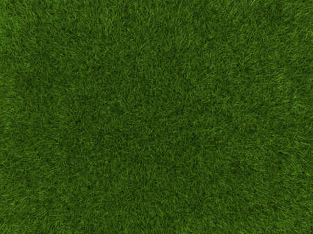 A grass texture of a cultivated land photo