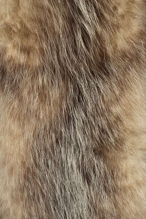 Close up of an animal colored fur texture photo