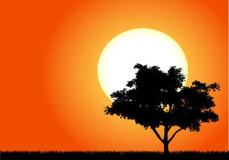 Silhouette eines Baumes in der untergehenden Sonne von Afrika