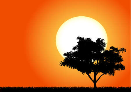 Silhouette of a tree in the sunset of Africa  Stock Vector - 11136364