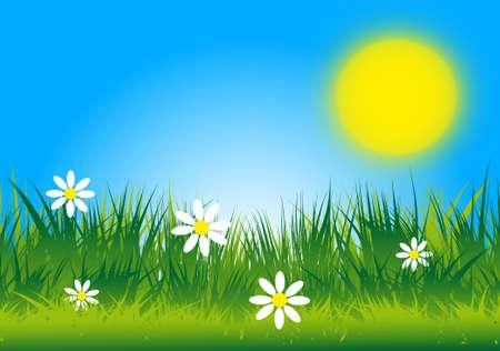 A sunny meadow vector image  Vector