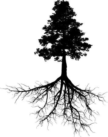 sapins: Silhouettes d'arbre avec ses racines
