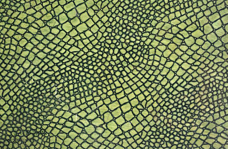 snakeskin: A close up of a green skin of snake Stock Photo