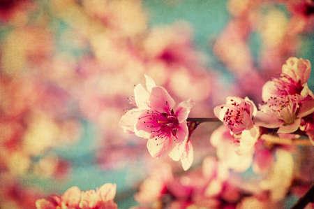 Grunge różowe kwiaty brzoskwini zamknąć się w ogrodzie