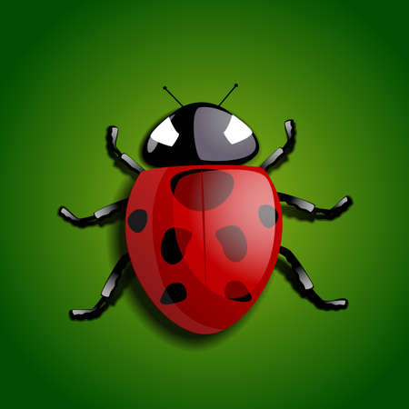 Realistic ladybug illustration Vector