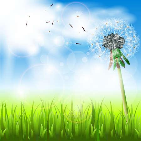 A dandelion in the sun in a meadow Vector