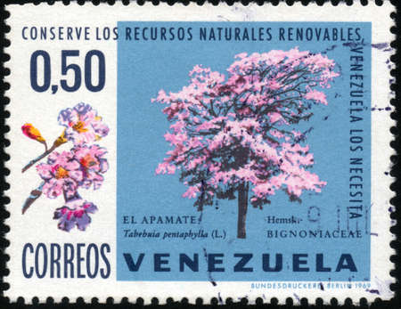 collectible: CIRCA 1969  A stamp printed in Venezuela showing a tree of Tabebuia Pentaphylla, circa 1969