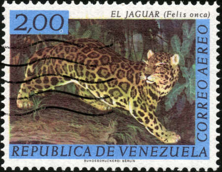 philately: CIRCA 1963  A stamp printed in Venezuela showing a Felis Onca, circa 1963