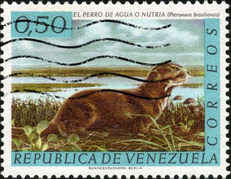 CIRCA 1963  A stamp printed in Venezuela showing a Pieronura Brasiliensis, circa 1963 photo