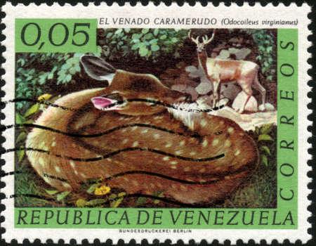 odocoileus: CIRCA 1963  A stamp printed in Venezuela showing a Odocoileus Virginianus, circa 1963 Stock Photo