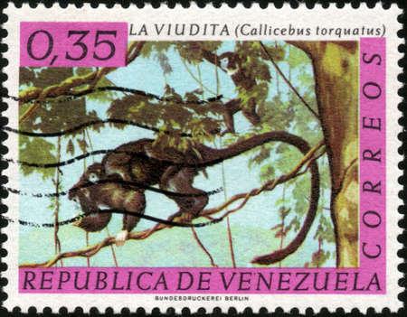 collectible: CIRCA 1963  A stamp printed in Venezuela showing a Callicebus Torquatus, circa 1963