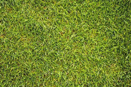 cultivated land: A grass texture of a cultivated land Stock Photo