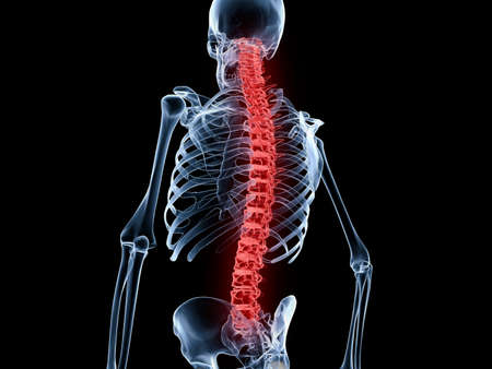 Red spine and vertebral column of a human skeleton photo