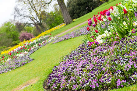 Landscaped Formal Garden with tulips and violets. Park.